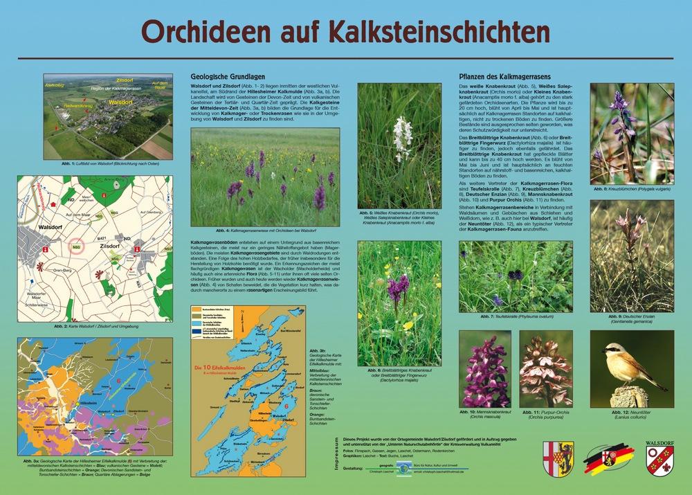 p_sd_70_Tafel_Magerrasen_Walsdorf_20_4_1