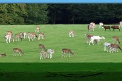 Wild- und Erlebnispark Daun
